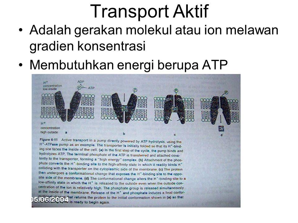 Transport Aktif Adalah gerakan molekul atau ion melawan gradien konsentrasi.