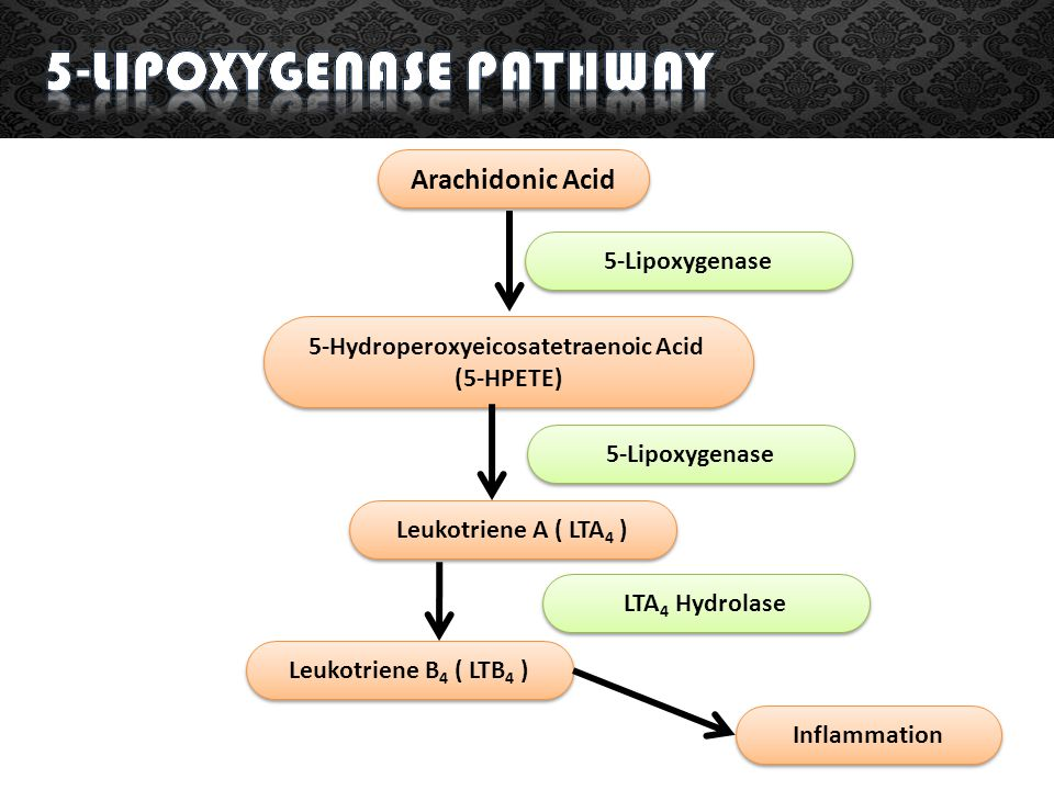 5-lipoxygenase Pathway 5-Hydroperoxyeicosatetraenoic Acid