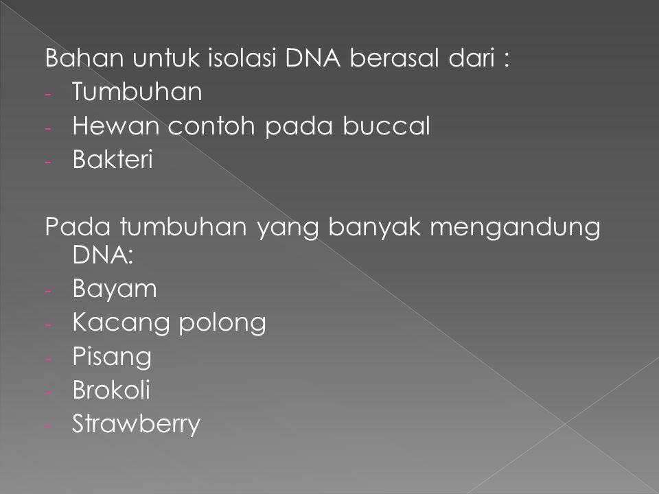 Bahan untuk isolasi DNA berasal dari :