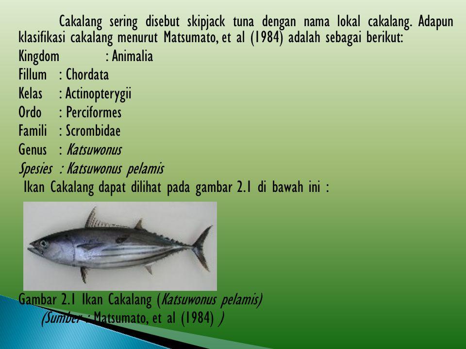 Cakalang sering disebut skipjack tuna dengan nama lokal cakalang