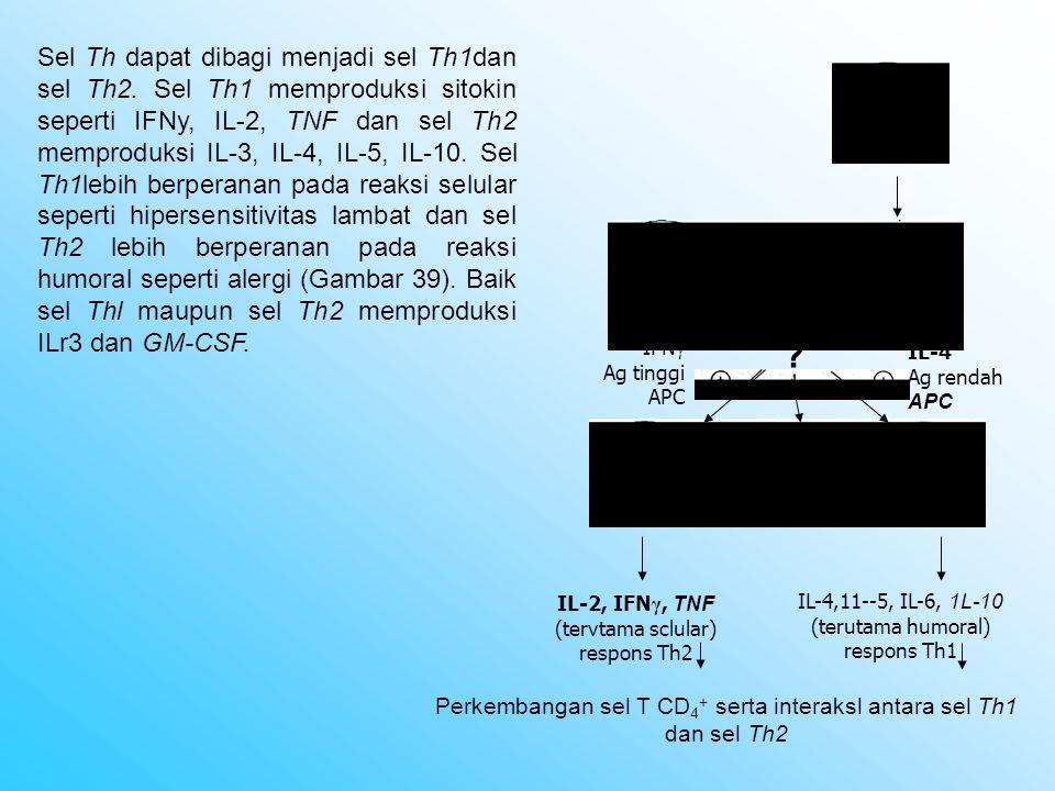 Sel Th dapat dibagi menjadi sel Th1dan sel Th2