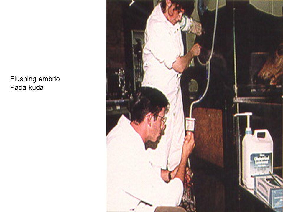 Flushing embrio Pada kuda
