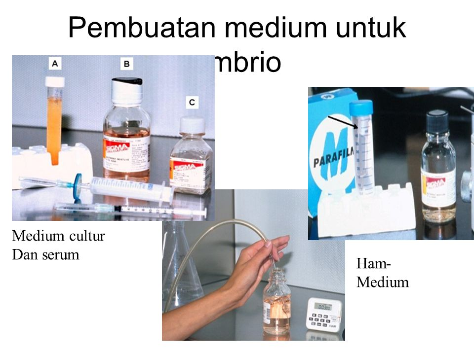 Pembuatan medium untuk embrio