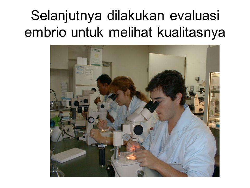 Selanjutnya dilakukan evaluasi embrio untuk melihat kualitasnya