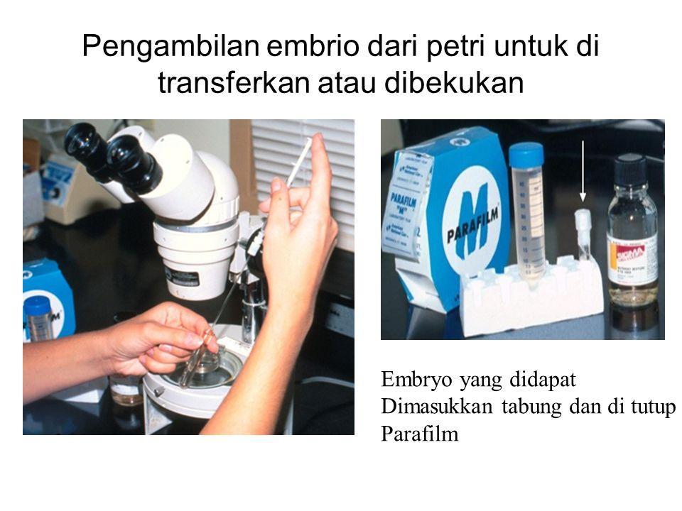 Pengambilan embrio dari petri untuk di transferkan atau dibekukan