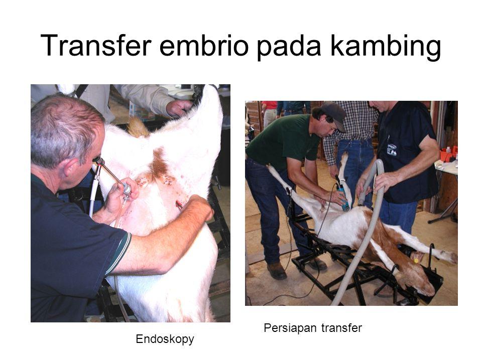 Transfer embrio pada kambing