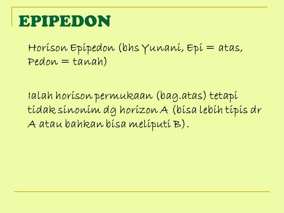 EPIPEDON Horison Epipedon (bhs Yunani, Epi = atas, Pedon = tanah)
