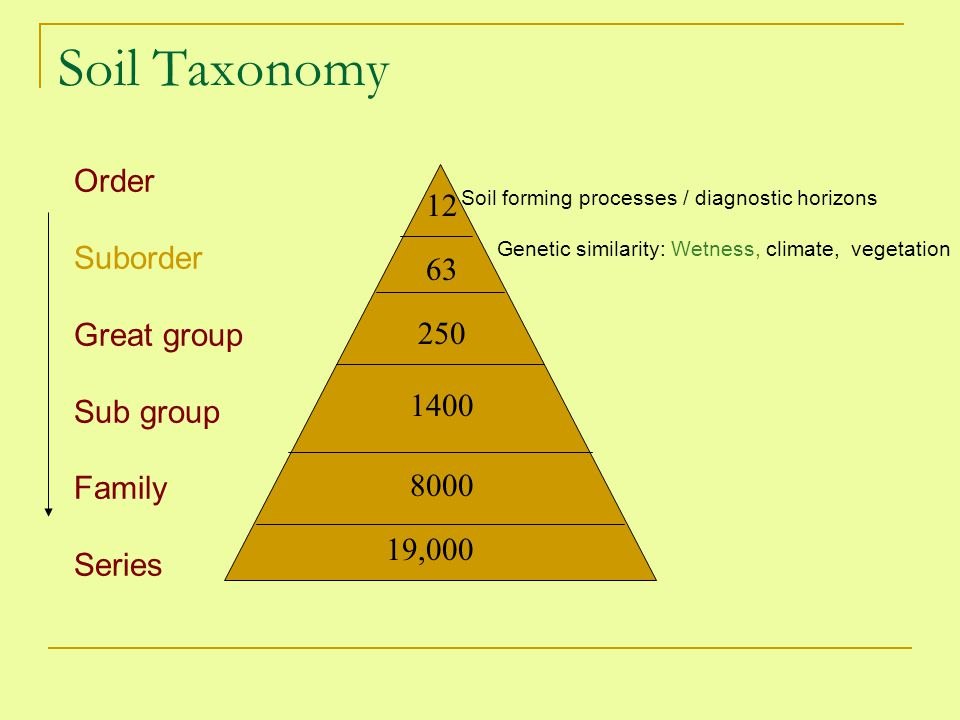 Soil Taxonomy Order 12 Suborder Great group 63 Sub group Family 250