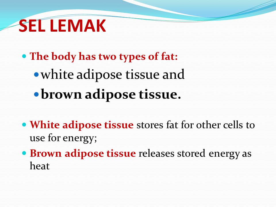 SEL LEMAK white adipose tissue and brown adipose tissue.