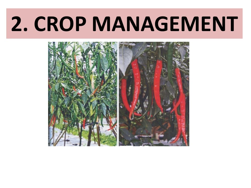 2. CROP MANAGEMENT