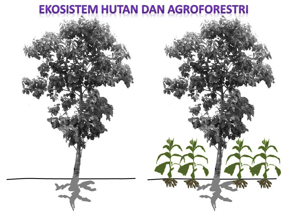 Ekosistem Hutan dan Agroforestri