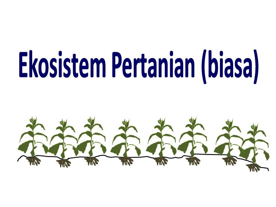 Ekosistem Pertanian (biasa)