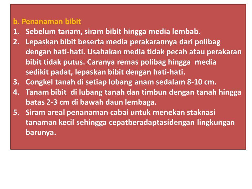 b. Penanaman bibit Sebelum tanam, siram bibit hingga media lembab.