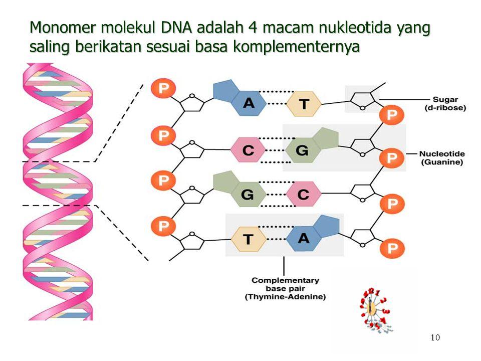 Monomer molekul DNA adalah 4 macam nukleotida yang saling berikatan sesuai basa komplementernya