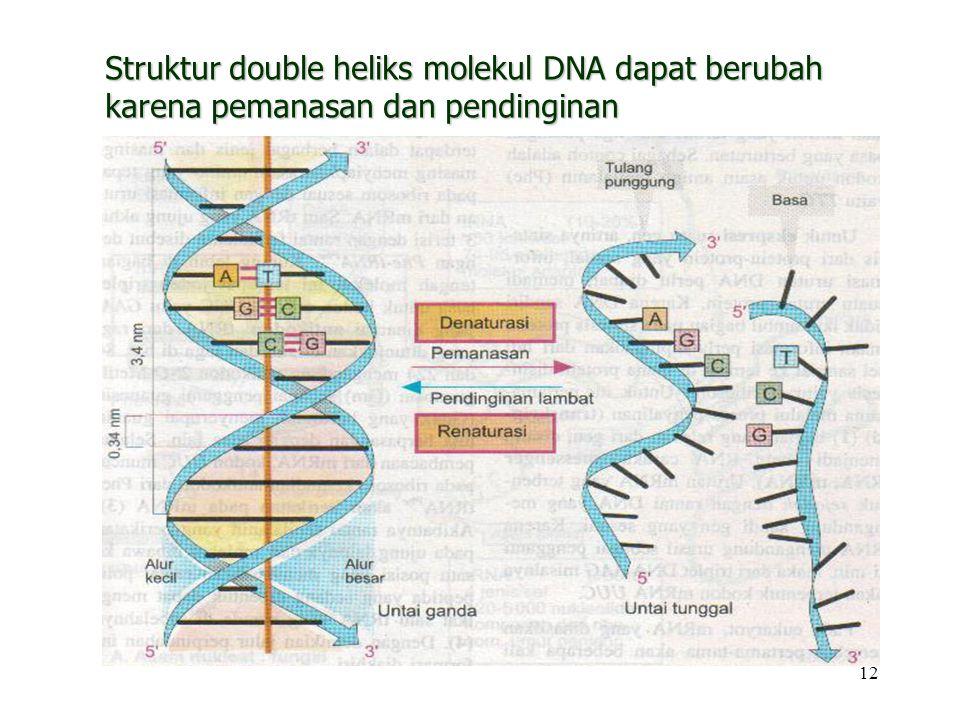 Struktur double heliks molekul DNA dapat berubah karena pemanasan dan pendinginan