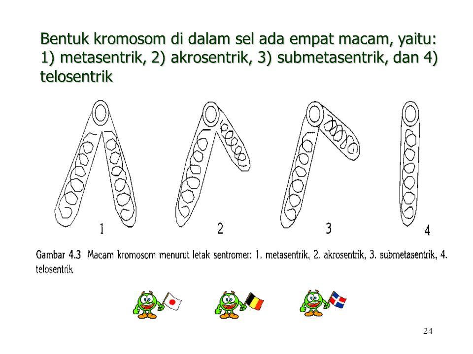 Bentuk kromosom di dalam sel ada empat macam, yaitu: 1) metasentrik, 2) akrosentrik, 3) submetasentrik, dan 4) telosentrik