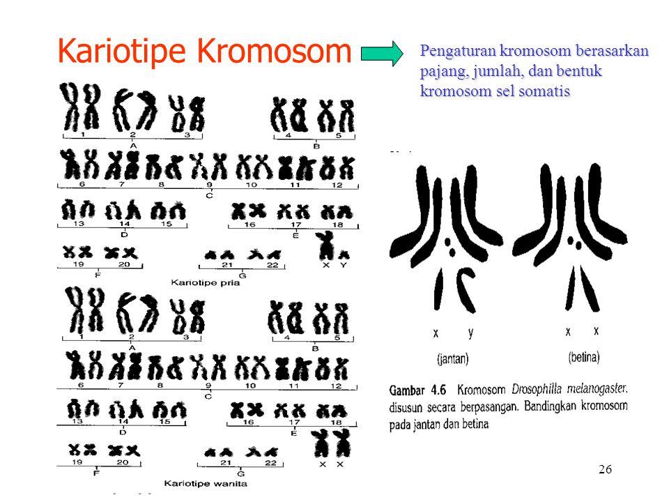 Kariotipe Kromosom Pengaturan kromosom berasarkan pajang, jumlah, dan bentuk kromosom sel somatis
