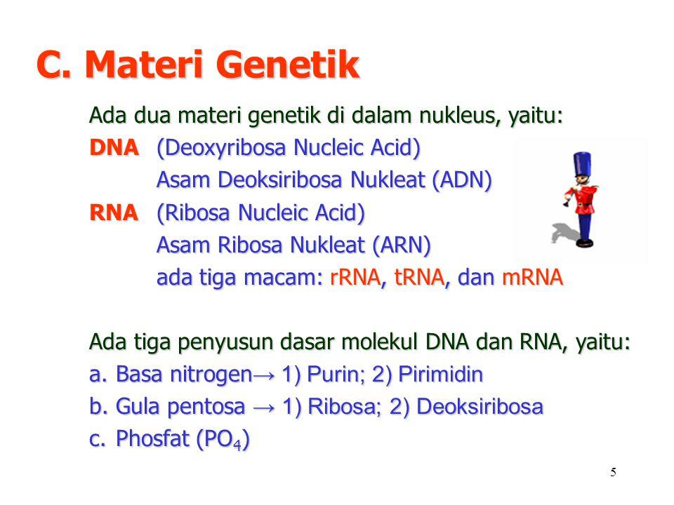 C. Materi Genetik Ada dua materi genetik di dalam nukleus, yaitu: