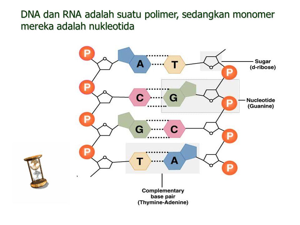DNA dan RNA adalah suatu polimer, sedangkan monomer mereka adalah nukleotida