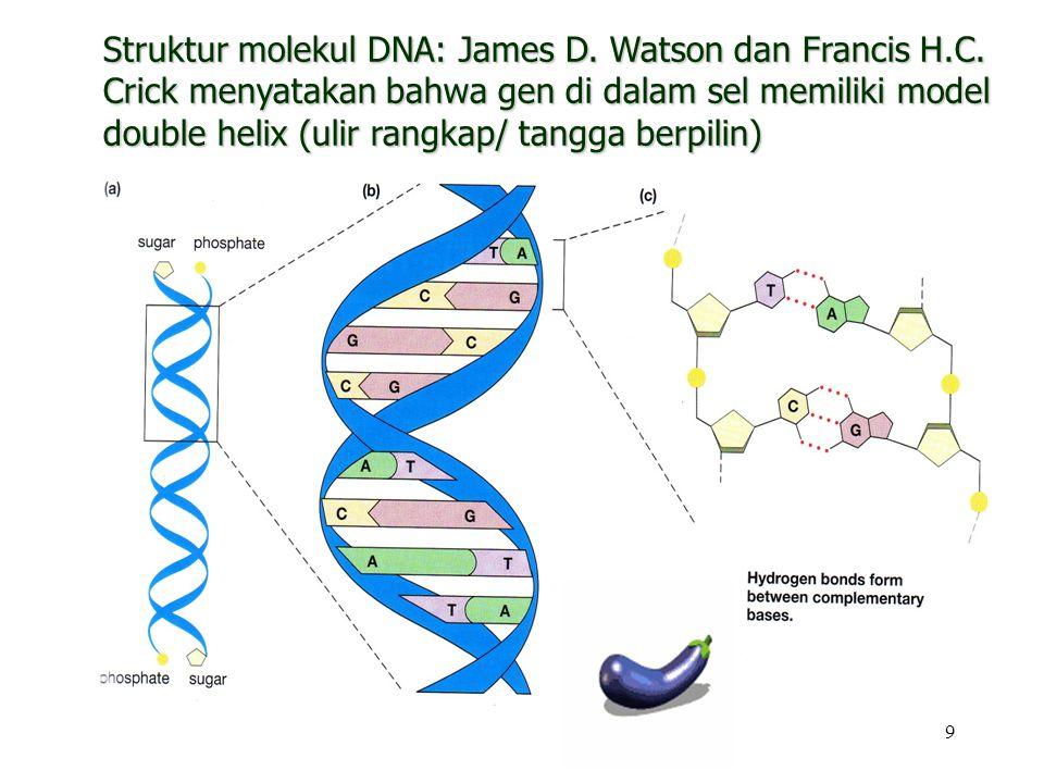 Struktur molekul DNA: James D. Watson dan Francis H. C