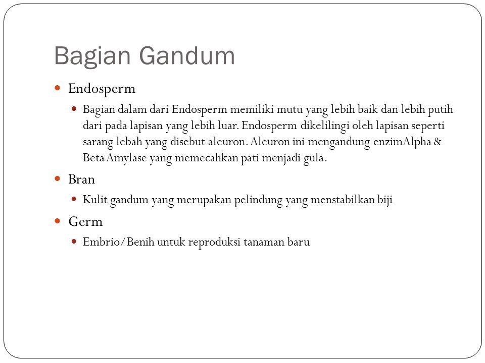 Bagian Gandum Endosperm Bran Germ