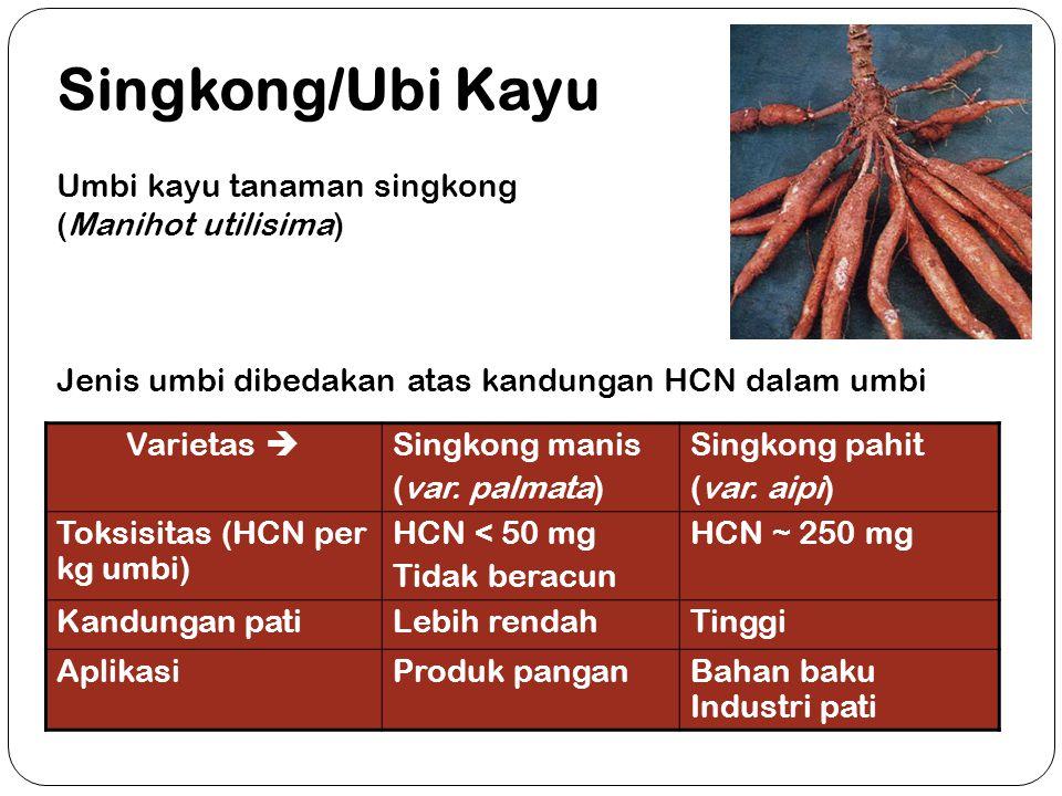 Singkong/Ubi Kayu Umbi kayu tanaman singkong (Manihot utilisima)
