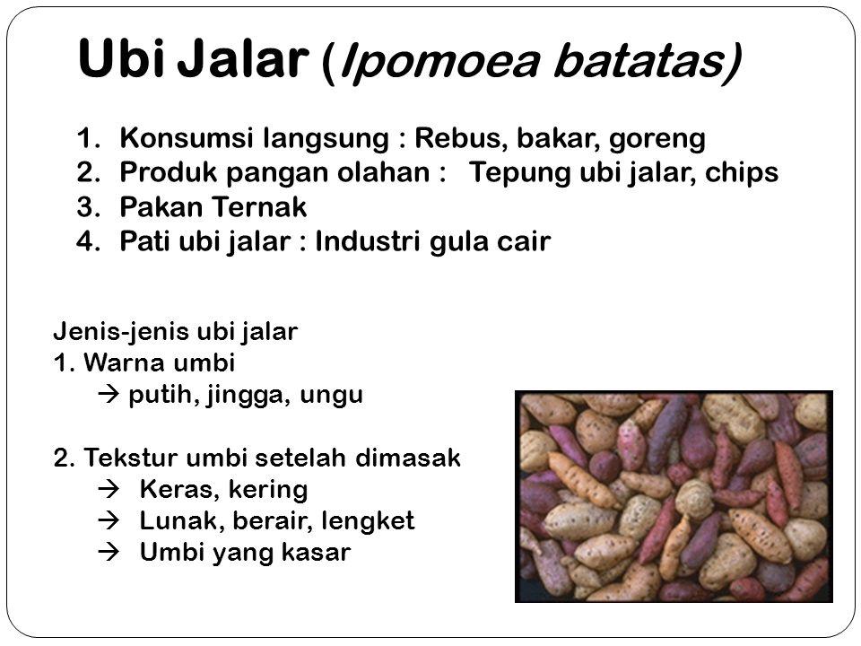 Ubi Jalar (Ipomoea batatas)