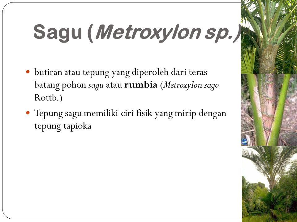 Sagu (Metroxylon sp.) butiran atau tepung yang diperoleh dari teras batang pohon sagu atau rumbia (Metroxylon sago Rottb.)