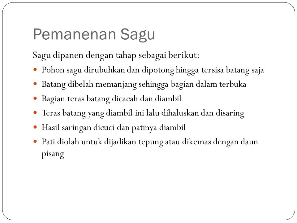 Pemanenan Sagu Sagu dipanen dengan tahap sebagai berikut: