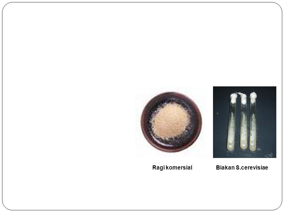 NUTRISI STARTER Nutrisi yang ditambahkan : (NH4)2SO4 5.19 g/l