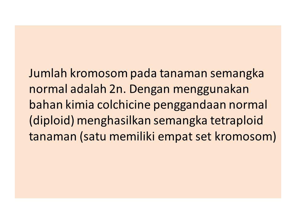Jumlah kromosom pada tanaman semangka normal adalah 2n
