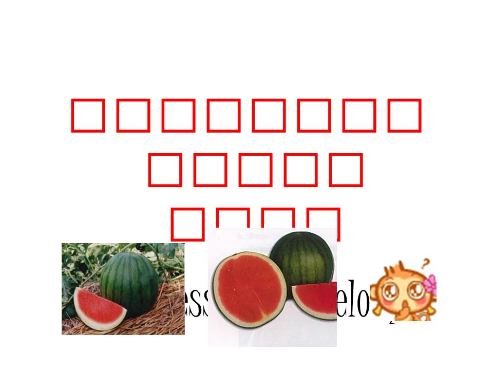 (Seedless Watermelon)