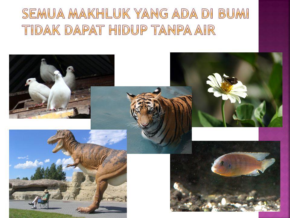 Semua makhluk yang ada di bumi tidak dapat hidup tanpa air