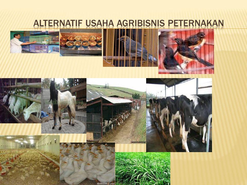 ALTERNATIF USAHA AGRIBISNIS PETERNAKAN