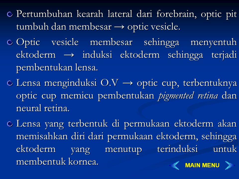Pertumbuhan kearah lateral dari forebrain, optic pit tumbuh dan membesar → optic vesicle.