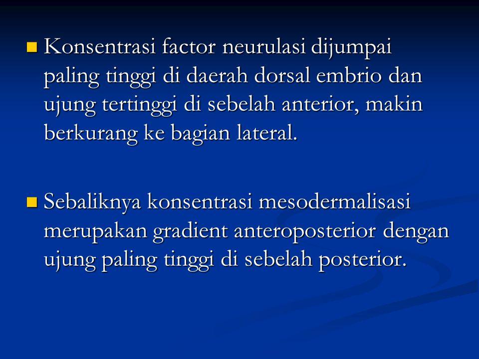 Konsentrasi factor neurulasi dijumpai paling tinggi di daerah dorsal embrio dan ujung tertinggi di sebelah anterior, makin berkurang ke bagian lateral.