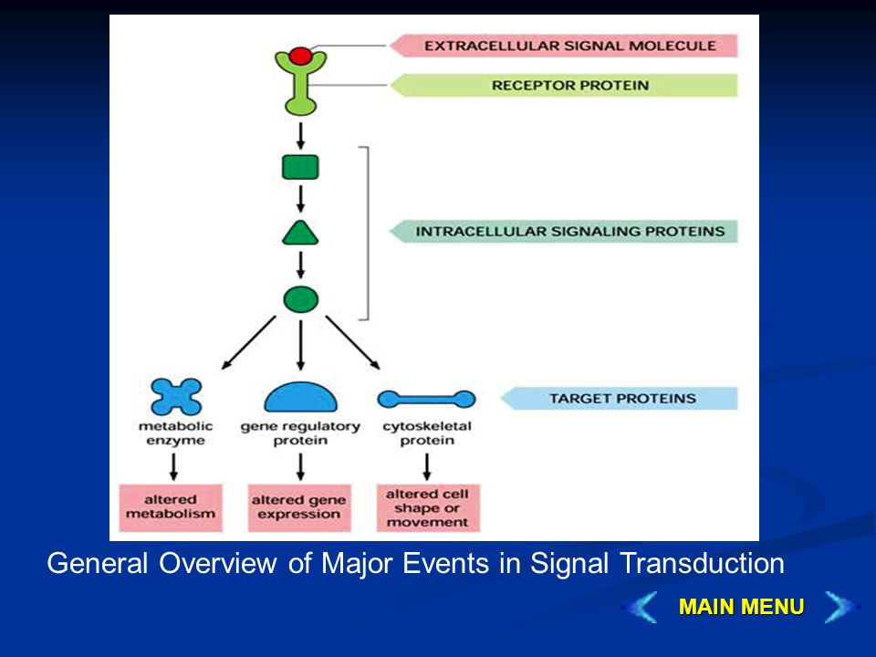 General Overview of Major Events in Signal Transduction