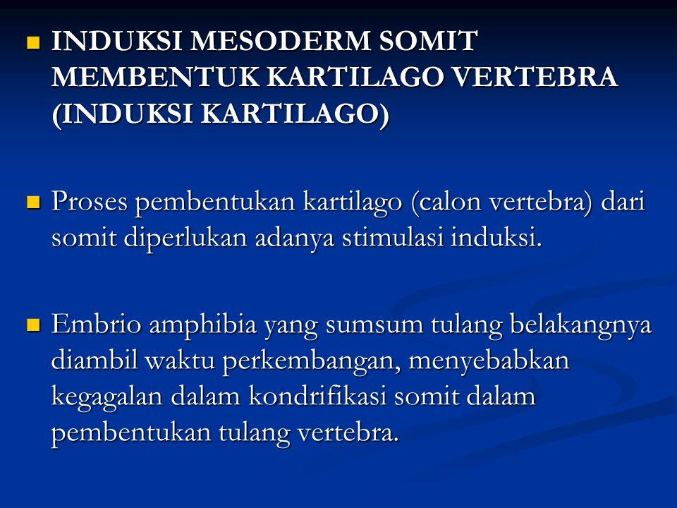 INDUKSI MESODERM SOMIT MEMBENTUK KARTILAGO VERTEBRA (INDUKSI KARTILAGO)