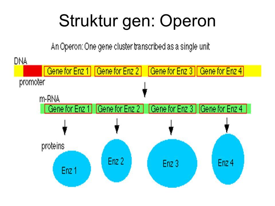 Struktur gen: Operon