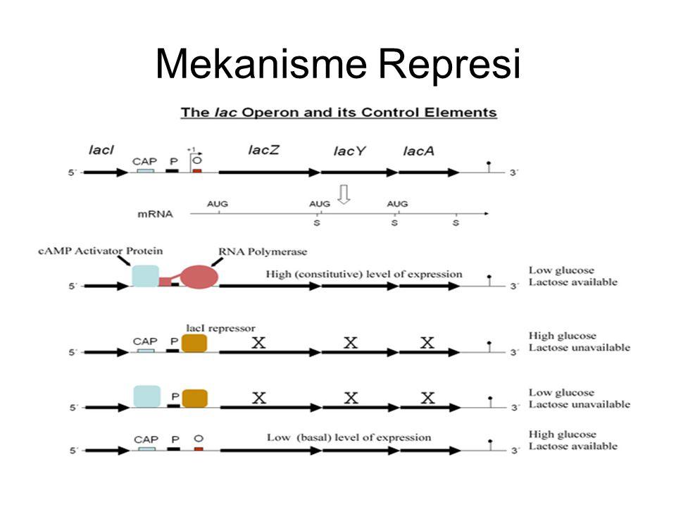 Mekanisme Represi
