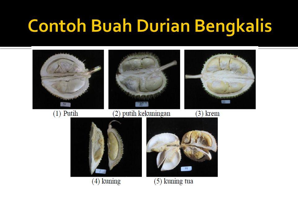 Contoh Buah Durian Bengkalis