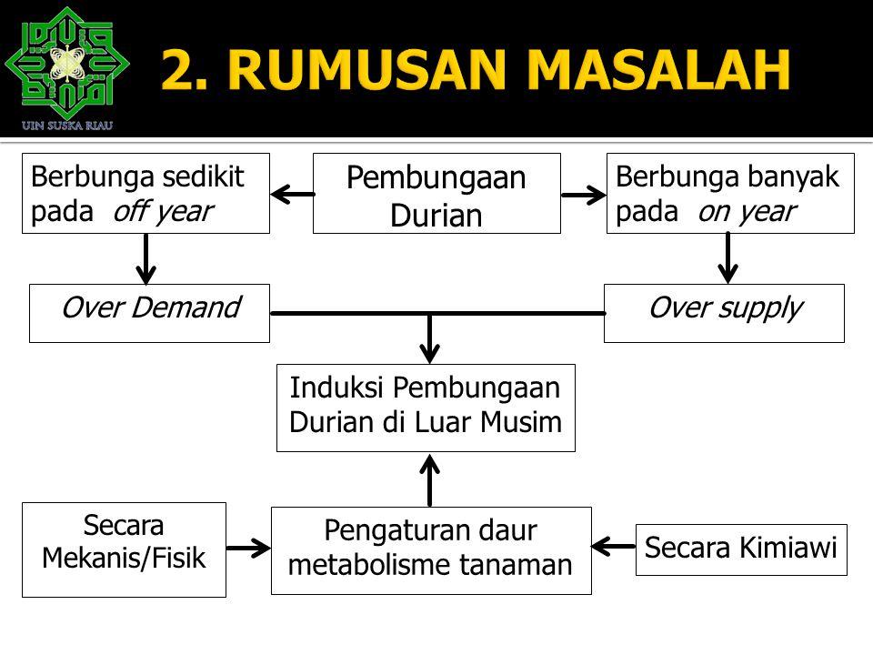 2. RUMUSAN MASALAH Pembungaan Durian Berbunga sedikit pada off year