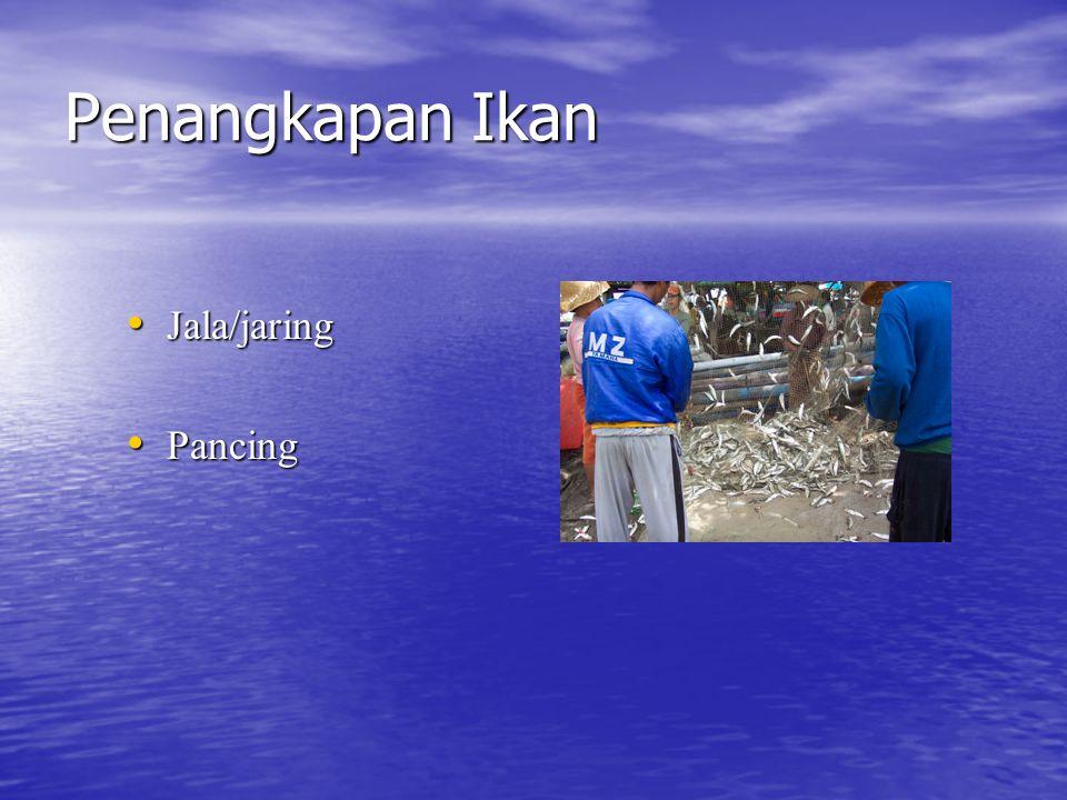 Penangkapan Ikan Jala/jaring Pancing