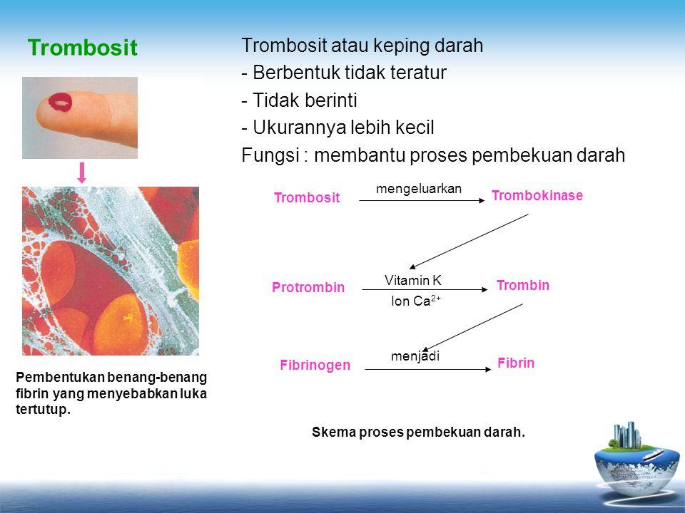 Skema proses pembekuan darah.