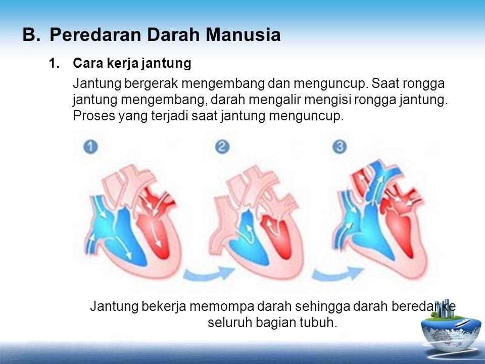 B. Peredaran Darah Manusia