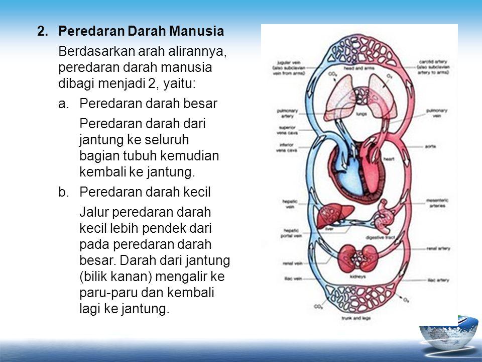 2. Peredaran Darah Manusia