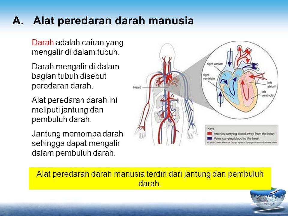 Alat peredaran darah manusia terdiri dari jantung dan pembuluh darah.