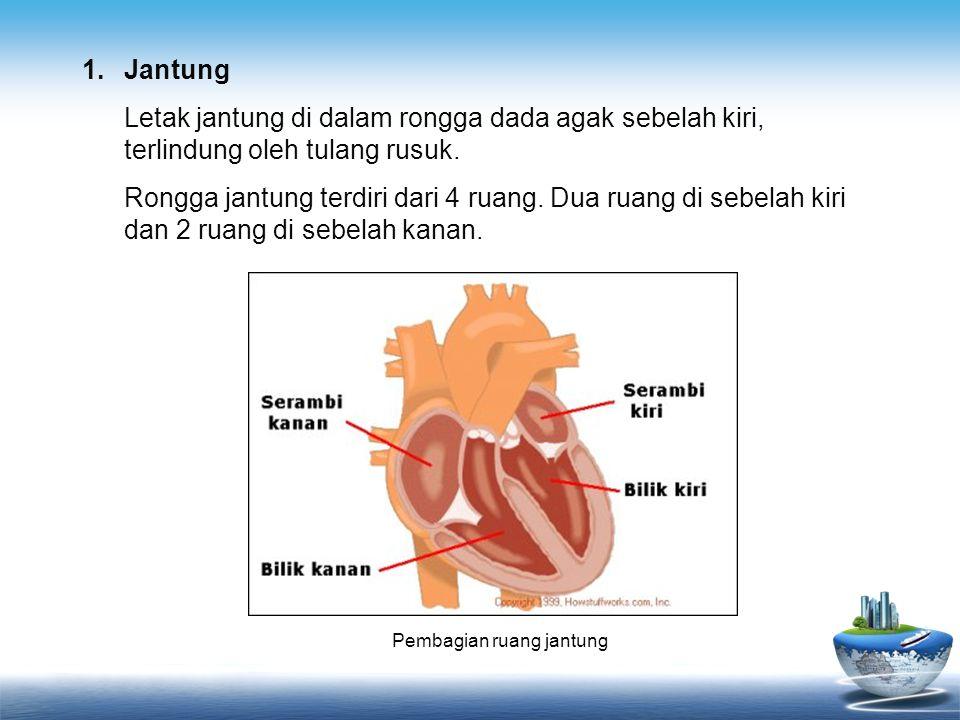 Pembagian ruang jantung