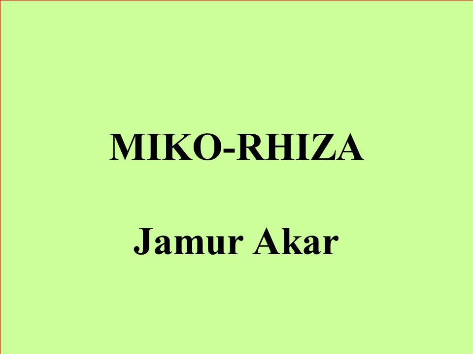 MIKO-RHIZA Jamur Akar