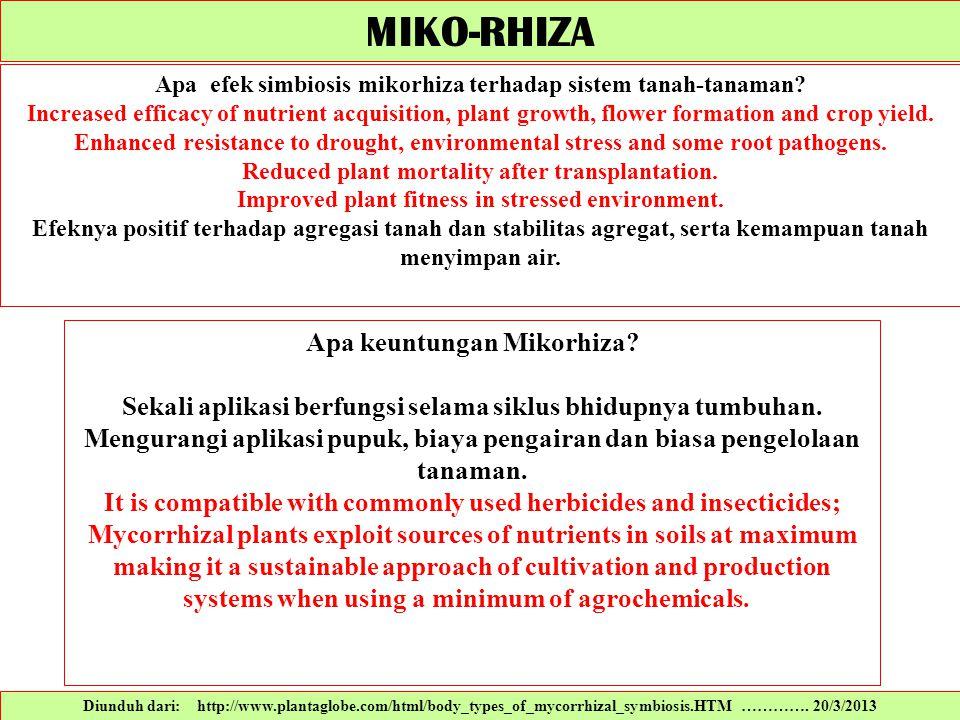MIKO-RHIZA Apa keuntungan Mikorhiza